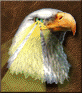 Advanced Eagle Eye.png